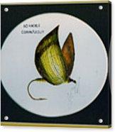 No Hackel Comparadum Acrylic Print