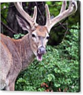 No It Is Not Hunting Season Acrylic Print