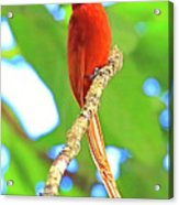No Name Bird Acrylic Print