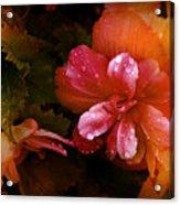 No Title002 Acrylic Print