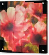 Nocturnal Pinks Photo Sculpture Acrylic Print