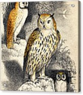 Nocturnal Scene With Three Owls Acrylic Print