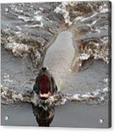 Noisy Sea Lion Acrylic Print