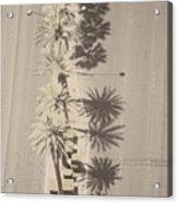 Noon Palms Acrylic Print