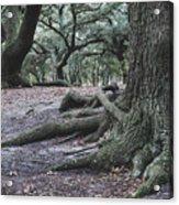 Norfolk Trees Acrylic Print