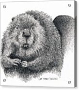 North American Beaver Acrylic Print