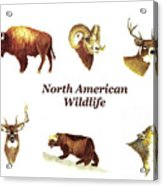 North American Wildlife Acrylic Print
