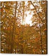 North Carolina Woods Acrylic Print