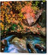 North Creek Fall Foliage Acrylic Print