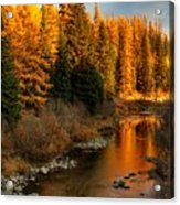 North Fork Yaak River Fall Colors #1 Acrylic Print