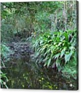 North Shore Forest Glade Acrylic Print