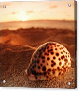 North Shore Seashell Acrylic Print