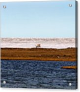 North Slope Acrylic Print