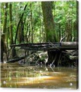 North West Florida Swamp Acrylic Print