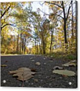 North Woods Road Two Acrylic Print