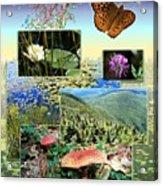 Northern Appalachian Summer Acrylic Print
