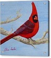 Northern Cardinal 2 Acrylic Print