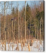 Northern Forests Ghost In-flight Acrylic Print