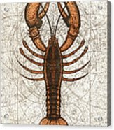 Northern Lobster Acrylic Print by Charles Harden