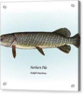 Northern Pike Acrylic Print