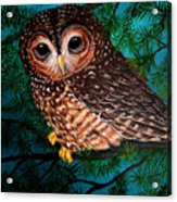Northern Spotted Owl Acrylic Print