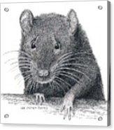 Norway Rat Acrylic Print