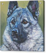 Norwegian Elkhound Acrylic Print
