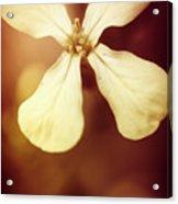 Nostalgic Wildflowers Acrylic Print