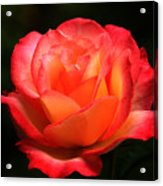 Not A Second Hand Rose Acrylic Print