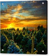 Not Forgotten Acrylic Print by Phil Koch