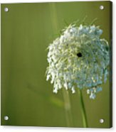 Not Just A Weed Acrylic Print