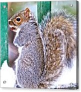 Not Leaving Without A Peanut Acrylic Print