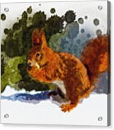 Not Much Goes On In The Mind Of A Squirrel Acrylic Print