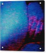 Not Ready Yet Acrylic Print