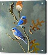 Nothing But Bluebirds Acrylic Print