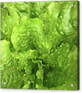 Nourish In Green Acrylic Print