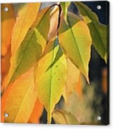 November Colors Acrylic Print