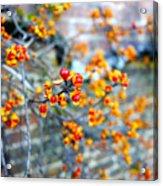 November Garden Wall Acrylic Print