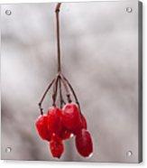 November Reds Acrylic Print