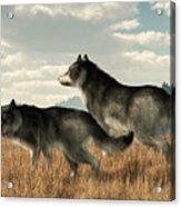 November Wolves Acrylic Print