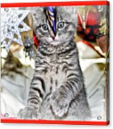 Now Where Did That Ornament Go I Just Saw It A Second Ago Acrylic Print