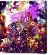 Nudibranch Flabellina Slug Seaslug  Acrylic Print