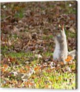 Nuts For Fall Acrylic Print