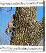 Nutsnutsnuts Acrylic Print