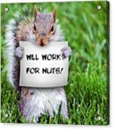 Nutty Squirrel Acrylic Print