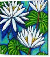Nymphaea Blue Acrylic Print