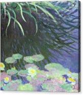 Nympheas Avec Reflets De Hautes Herbes Acrylic Print