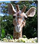 Oahu Giraffe Acrylic Print