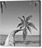 Oahu Palms Acrylic Print by Tomas del Amo - Printscapes