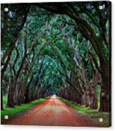Oak Alley Road Acrylic Print